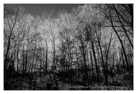 BW photograph of a sunrise at Morgan Run-front lit and silhouetted trees.