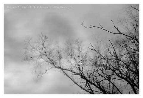 BW photograph of tree limbs blowing in the wind on an overcast day.