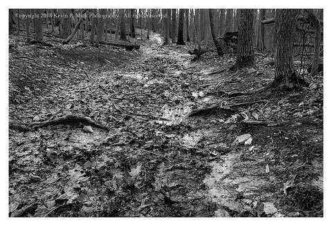 BW photograph of a muddy trail following a heavy rain.