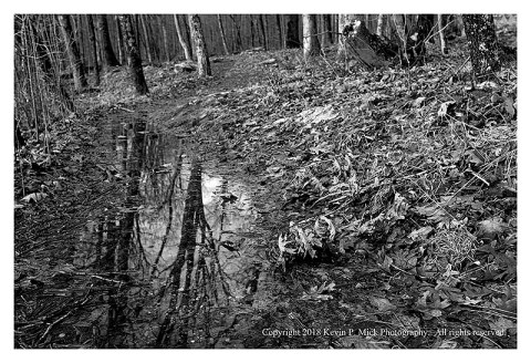 BW photograph of a puddle along a trail after a downpour.