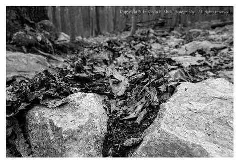 BW photograph of leaves stuck behind rocks after a downpour.