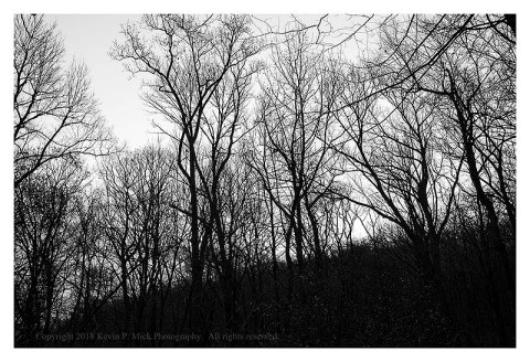 BW photograph of trees silhouetted againt the rising sun.