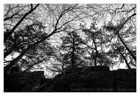 BW photograph of trees at the top of a rock formation.