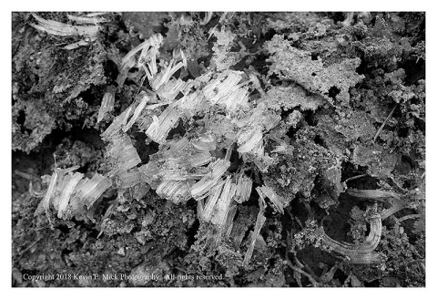 BW photograph of some ground frost pillars.