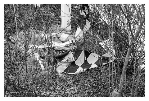 BW photograph of wind-torn Maryland and U.S. flags laying in bushes.
