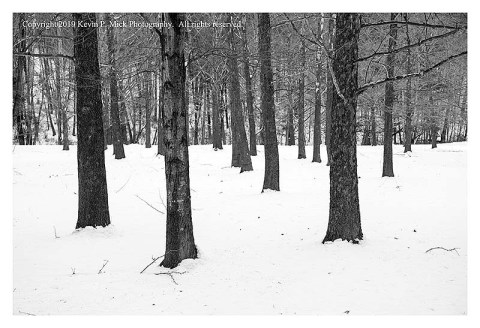 BW photograph of trees after a snow storm.