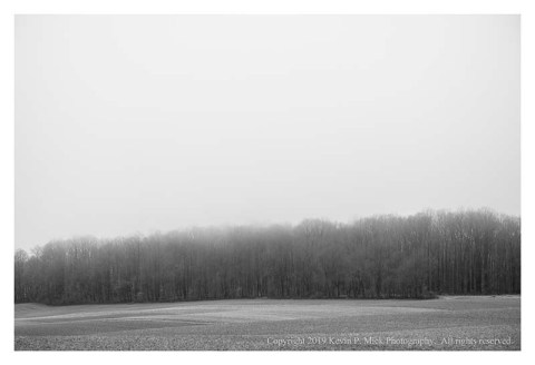 BW photograph of a distant tree line on a foggy afternoon.