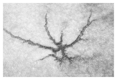 BW photograph of a neuron-shaped break in an ice-covered creek.