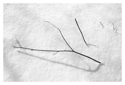 BW photograph of a twig poking through newly fallen snow.