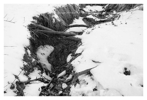 BW photograph of trail erosion at Morgan Run.