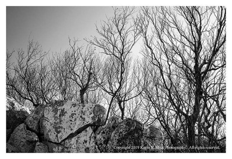 BW photograph of the sun rising behind the trees of Cat Rock.