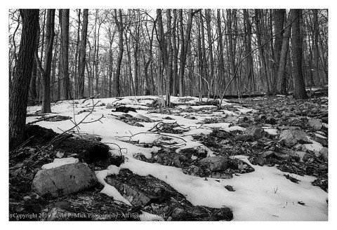 BW photograph of the remaining snow in the woods on a just post-dawn morning.