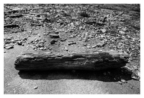 BW photograph of a short piece of log and other rocky debris after a recent flood.