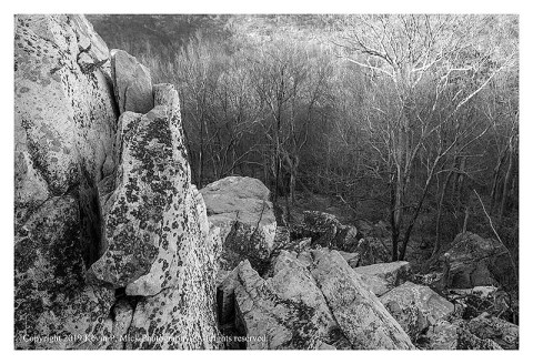 BW photograph of sun rising looking off Cat Rock into the woods.