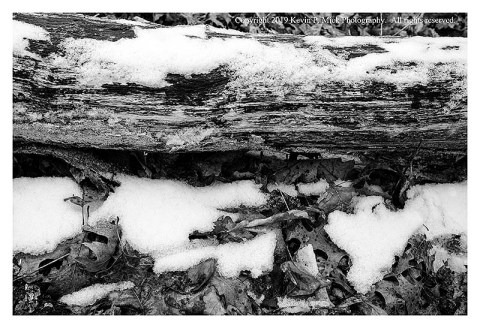 BW photograph of a decaying tree trunk with some patchy snow.