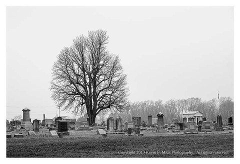 BW photograph of a tree overlooking a cemetery.