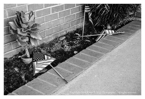 BW photograph of three United States flags-two are laying in a flower bed, one is falling into a bush.