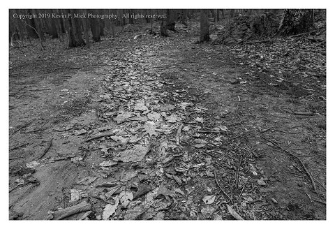 BW photograph of the leave demarcating the fall line of the flooding water on a trail.