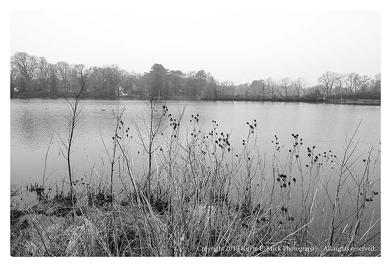 BW photograph of Silver Lake looking through some reeds.