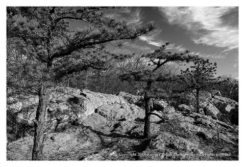 BW photograph of three pine trees growing along the top of a rock formation.