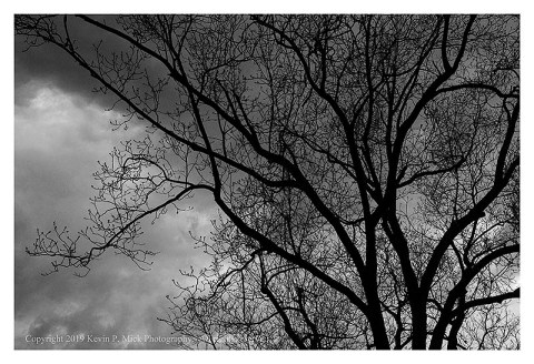 BW photograph of a silhouetted tree against rain clouds.
