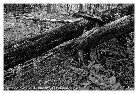 BW photograph of the intersection of several fallen logs on a trail.