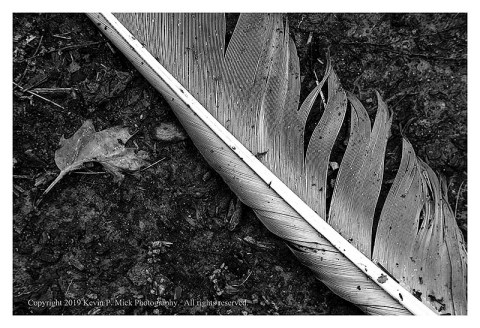 BW photograph of a feather upon the ground.