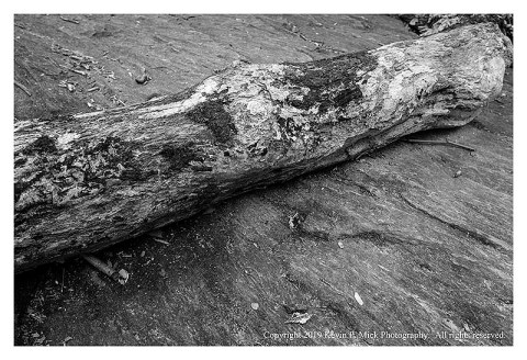 BW photograph of a decaying log alight on a large rock after a flood.