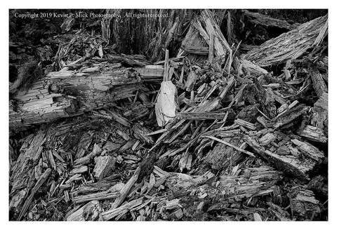 BW photograph of tree debris in Rainier National Park.