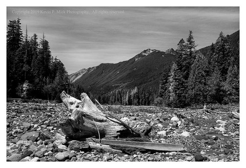 BW photograph of some debris in the dried out run-off in Rainier National Park.