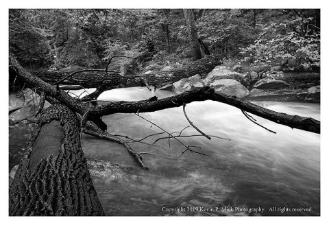 BW photograph of downed trees over Big Hunting Creek after strong storms.