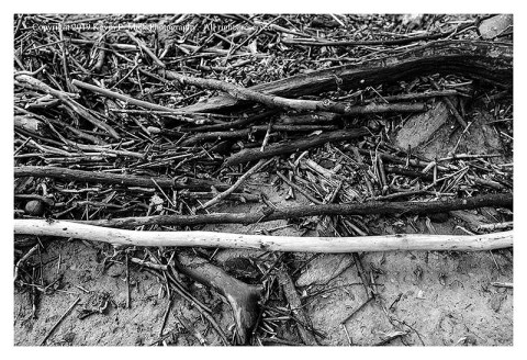 BW photograph of piled sticks after the flooding at Morgan Run.