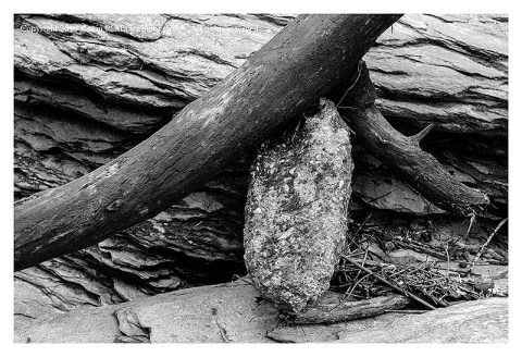 BW photograph of a log and rock wedged together after the flooding at Morgan Run.