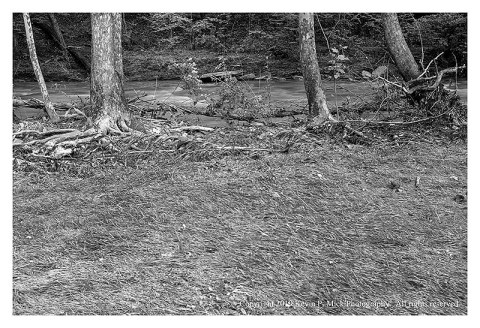 BW photograph of the flood plain at Morgan Run after the water receeded.