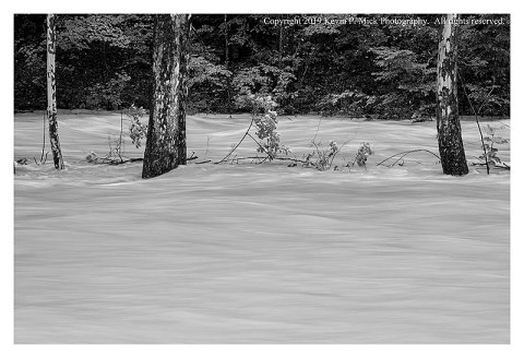 BW photograph of three trees partially submerged by floodwaters.