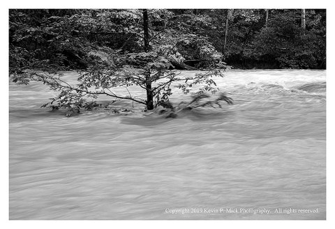 BW photograph of a lone tree partially submerged by floodwaters.