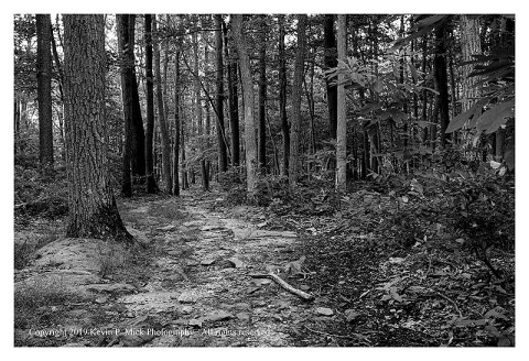 BW photograph of a trail through the woods in the early morn.