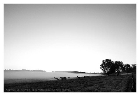 BW photograph of horses in a field on a foggy morning.