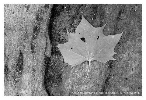 BW photograph a single leaf with holes laying atop a large boulder.