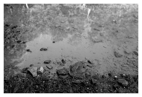 BW photograph of trees reflected in a puddle after a thunderstorm.