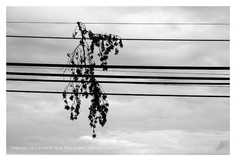BW photograph of a branch caught in overhead powerlines.