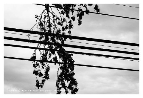 BW photograph of a branch caught in overhead powerlines-closer view.