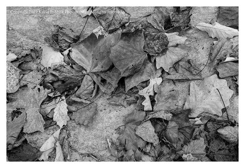 BW photograph of dead autumn leaves laying atop a rock.