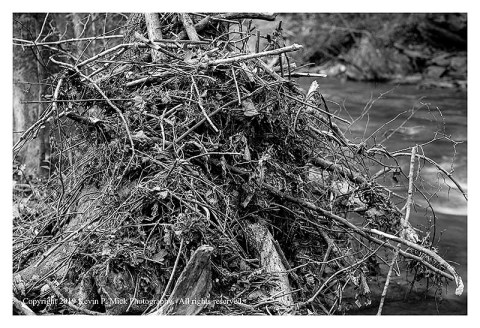 BW photograph of debris collected against a tree after a flood.