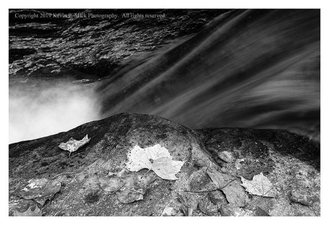 BW photograph of some fallen autumn leaves laying atop a rock with a small falls in the background.