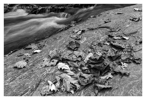 BW photograph of some dead leaves atop a large rock with running water in the background.