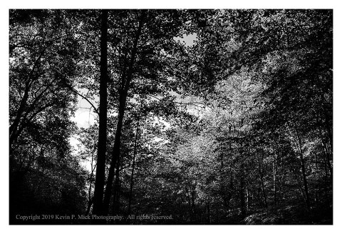 BW photograph of sunlit trees in autumn.