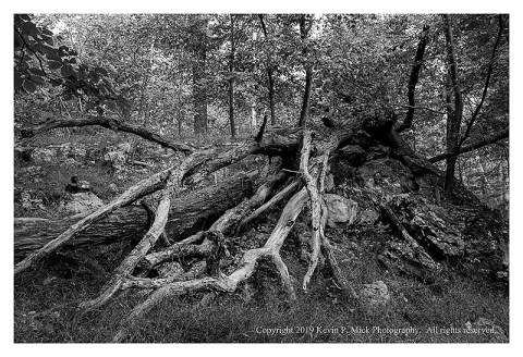 BW photograph of a broken tree overlapping a large rock.