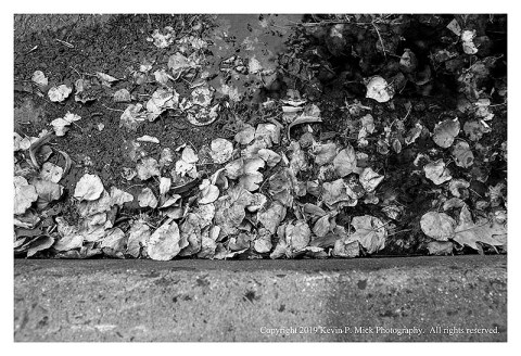 BW photograph of fallen leaves laying in a puddle in a gutter.