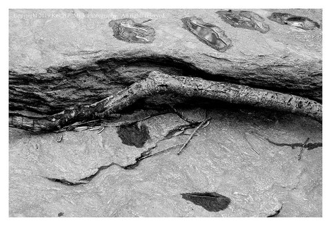 BW photograph of a branch wedged against a rock after a hard rain.